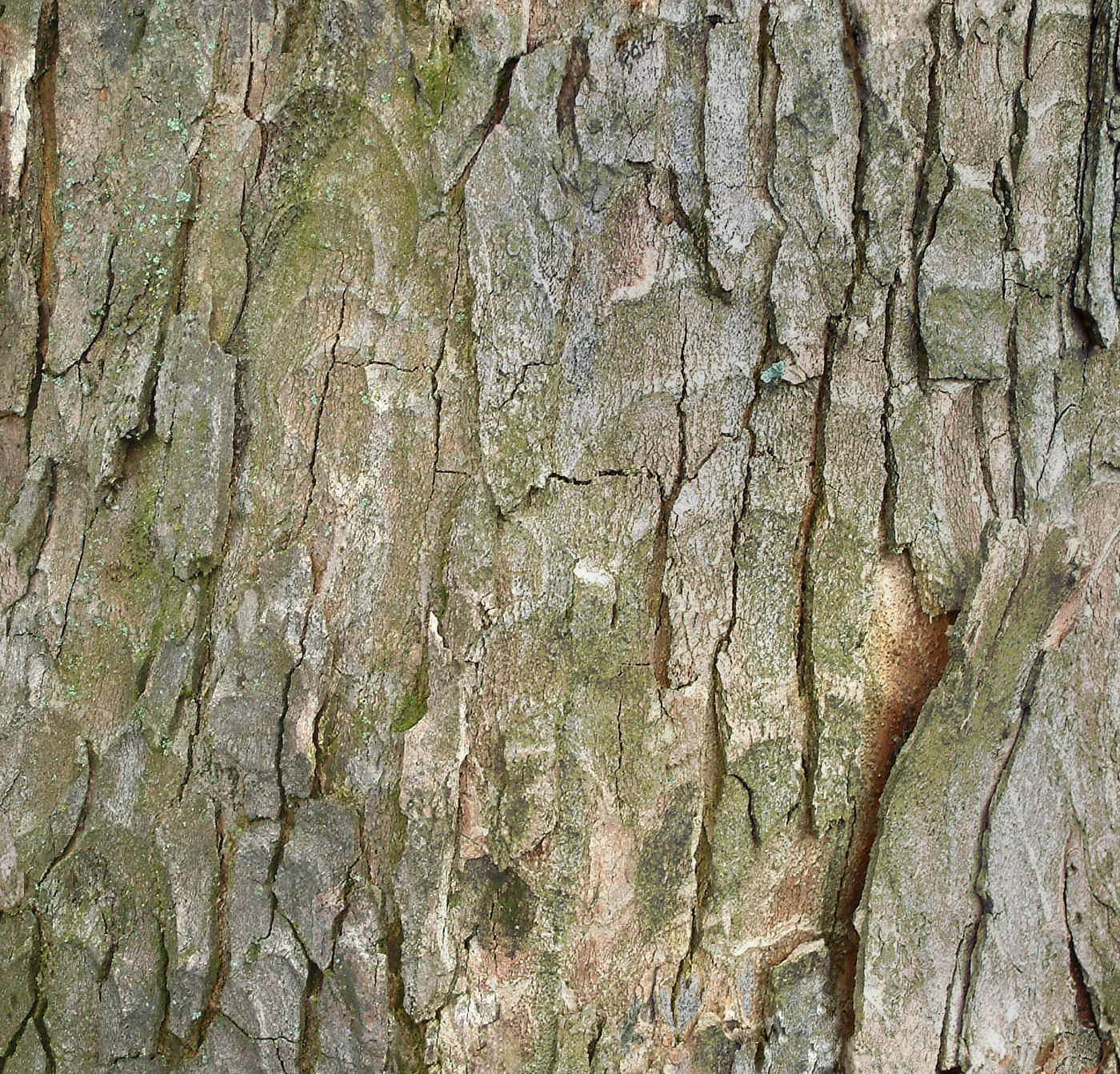 bark tree baum